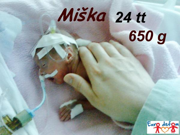 Miška sa narodila